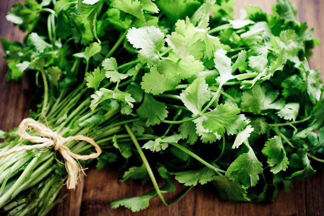 cilantro-coriander-bunch