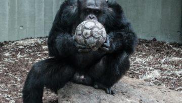 Superdoei voetbal uefa champions league Marcel Maassen meneren