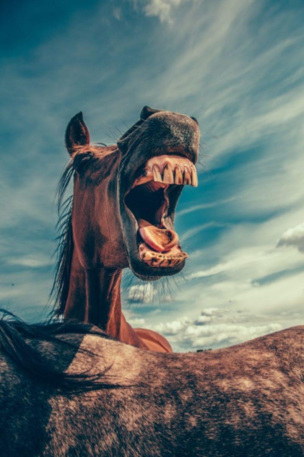 Paard, bek
